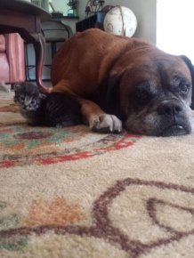 This Dog And Cat Became Besties Pretty Quick