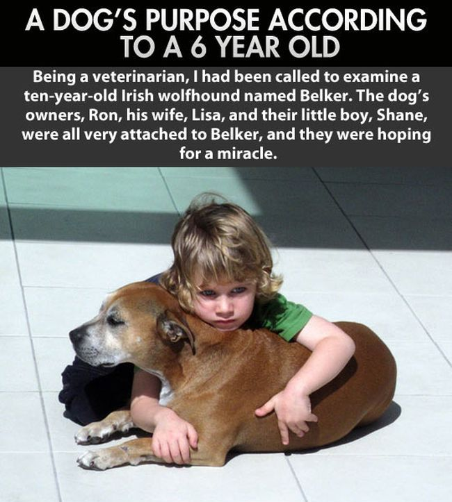 Kid Explains Why Humans Live Longer Than Dogs
