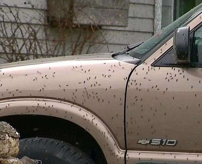Fly Season Is Here And There's No Escape