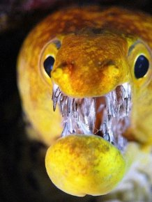 These Eels Will Haunt Your Dreams