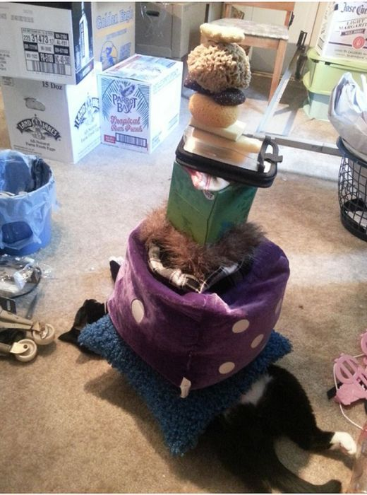 How Many Items Can You Stack On A Lazy Cat
