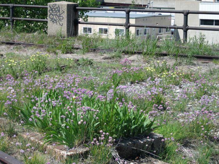 Photos Of The High Line Abandoned Railway