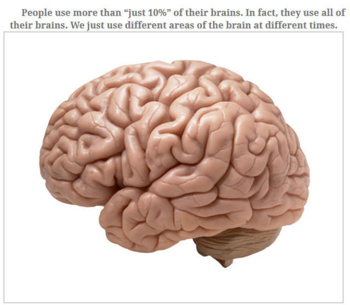Feed Your Brain With These Awesome Facts
