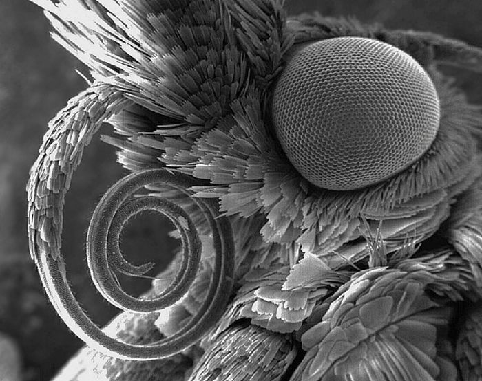 Random Things Through An Electron Microscope