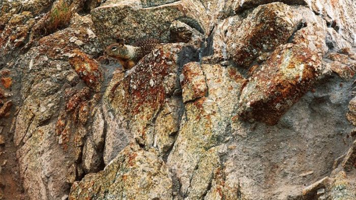 Can You Find These Camouflaged Animals