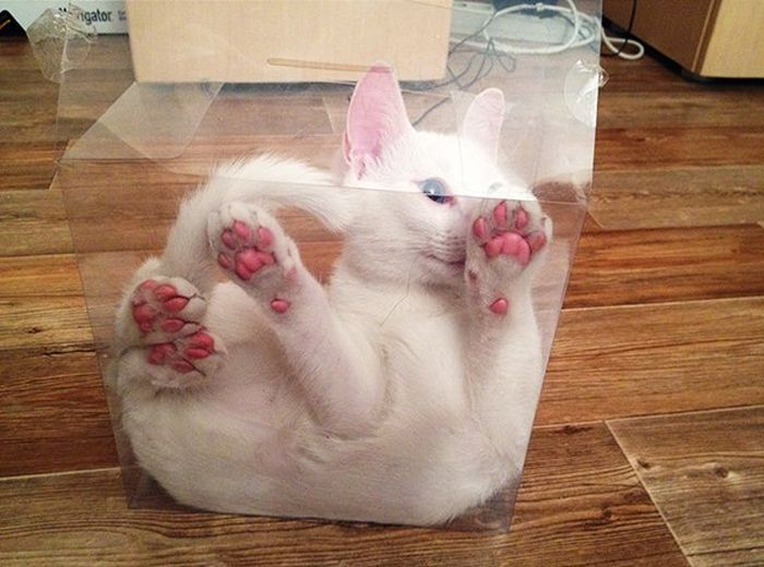 This Poor Cat Is Trapped In A Box