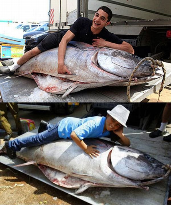 Huge Tuna Fish