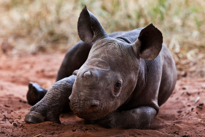 This Is How You Fight Poachers