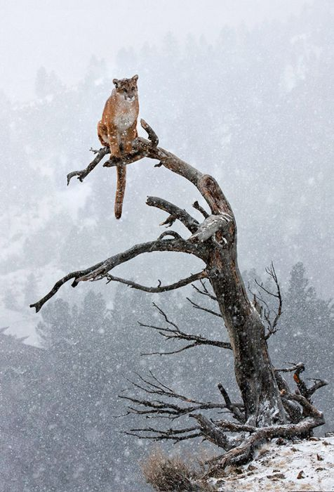 The Most Epic Animal Pictures Ever
