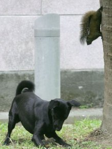 Mother Squirrel Saves Baby From Dog
