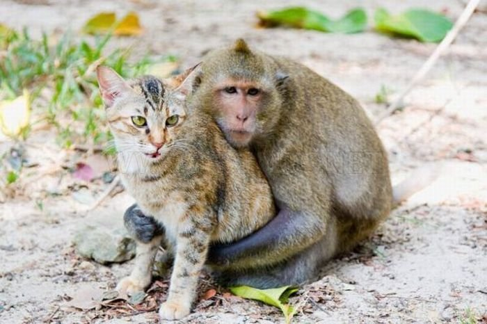 Monkey And Cat Story With Pictures