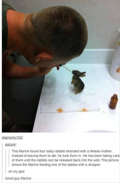 Proof That Animals And Humans Need Each Other