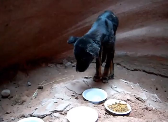 Puppy Gets Rescued From A Canyon