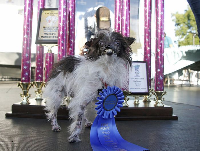 This Dog Won A Ribbon For Being Ugly
