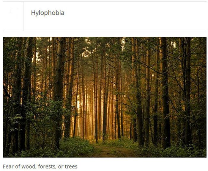 The Weirdest Phobias That People Actually Have