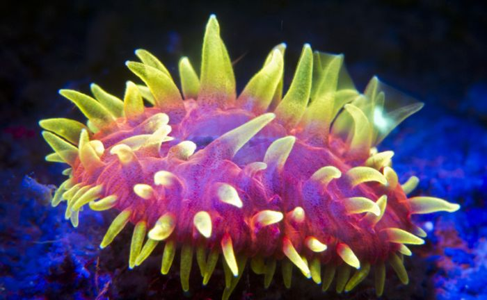 Coral Reefs Look Stunning Under UV Light