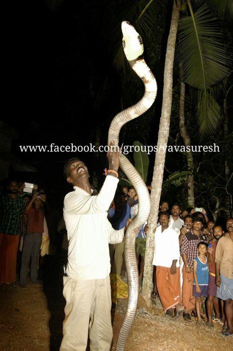 Vava Suresh Has A Very Unique Job