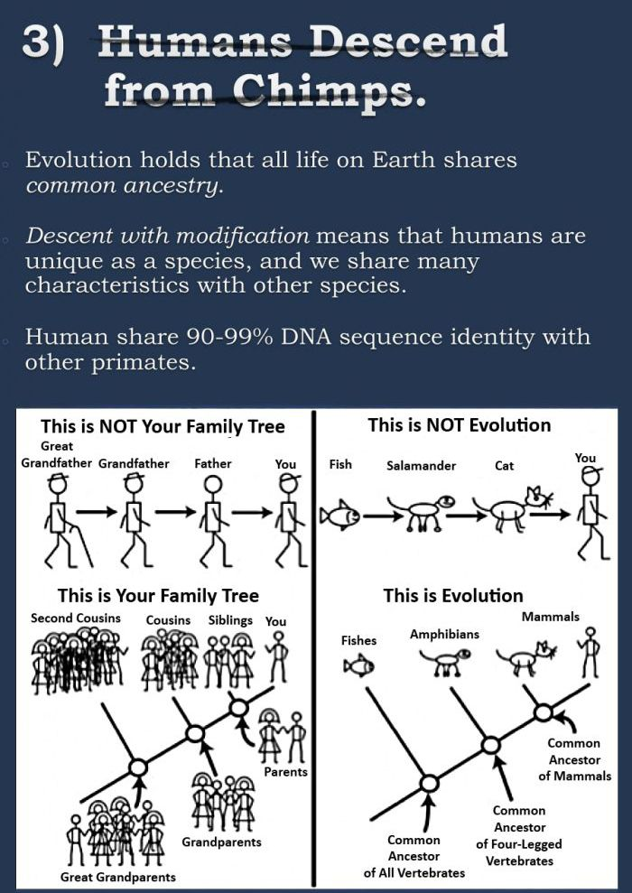 The Evolution Argument Continues