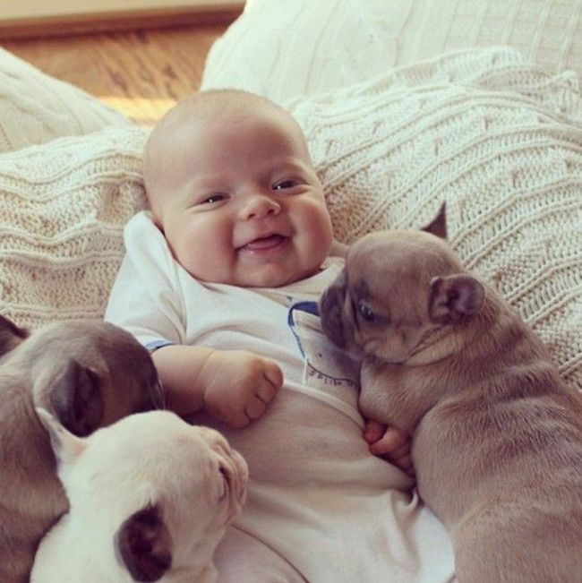 These Puppies Will Kill You With Cuteness