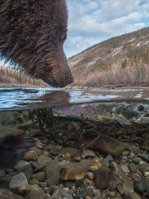 Simply Stunning Wildlife Photos