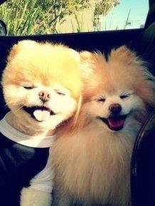 Boo And Buddy Make A Cute Couple