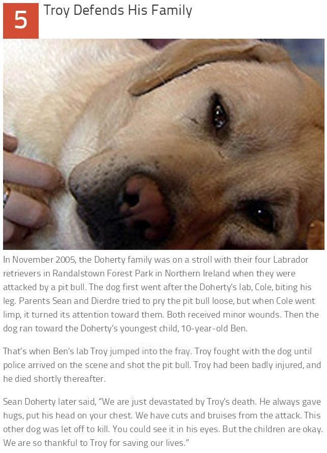 These 10 Dogs Are Heroes