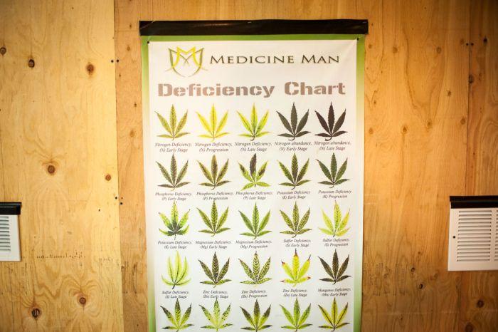 Inside A Marijuana Growhouse