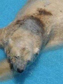 The World's Saddest Polar Bear
