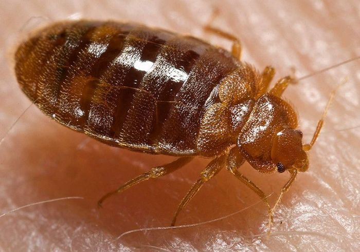 These Creatures Could Be Living In Your House
