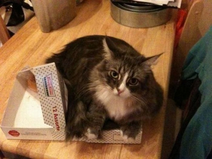 A Cat Will Sit Wherever It Wants To Sit
