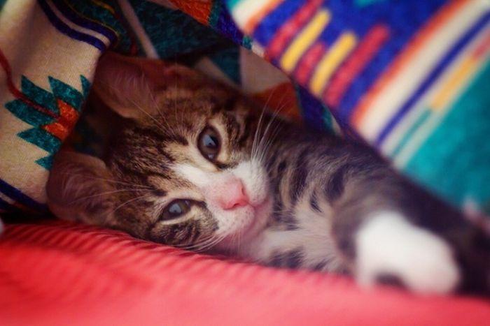Abandoned Kittens Get Nursed Back To Health