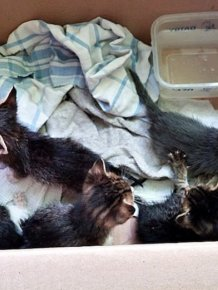 Abandoned Kittens Get Nursed Back To Health