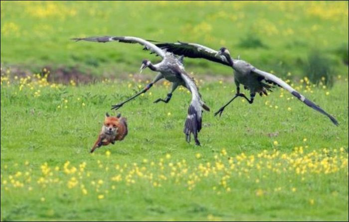 Real Life Angry Birds, part 2