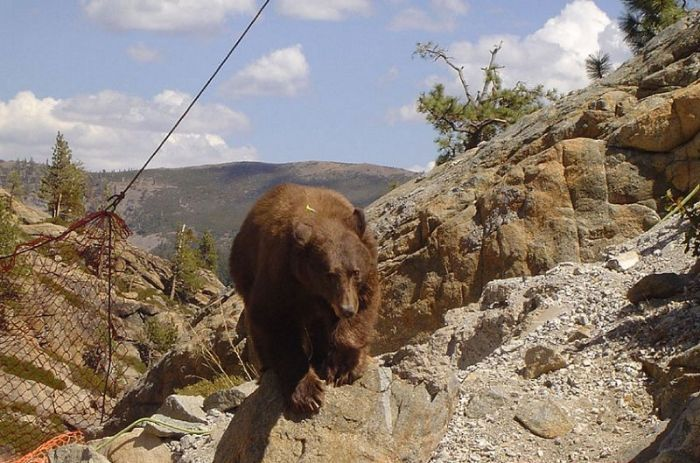 Bear Gets Rescued From A Bridge