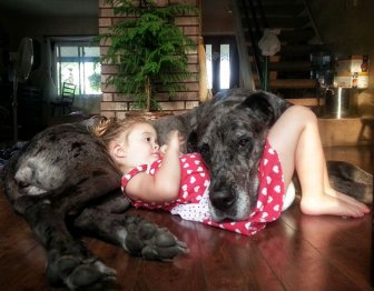 Small Kids Are Safe With Big Dogs