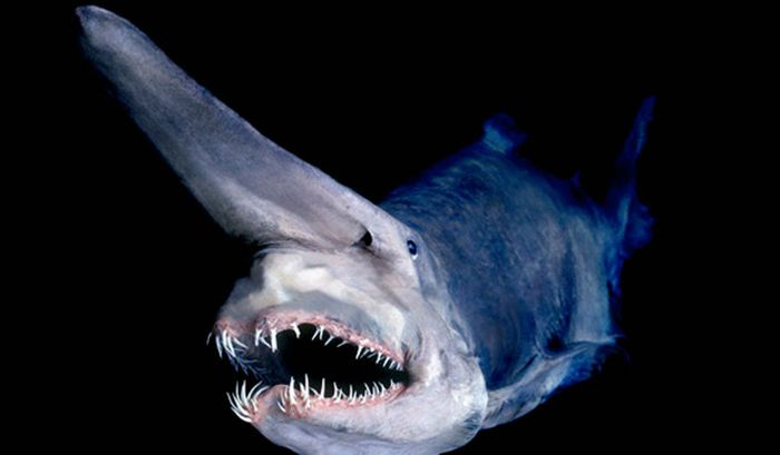 The 12 Most Terrifying Things Living In The Ocean
