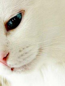 Cat Looks Dead When Taking A Nap