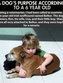 A Dog's Life As Told By A 6 Year Old
