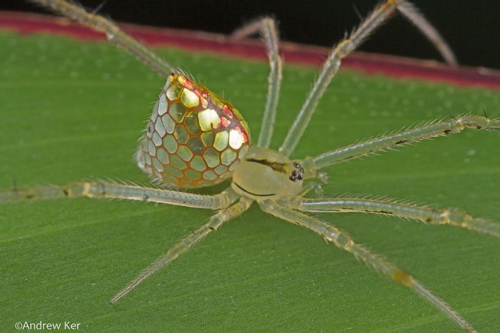 Are These Spiders Or Jewelry?