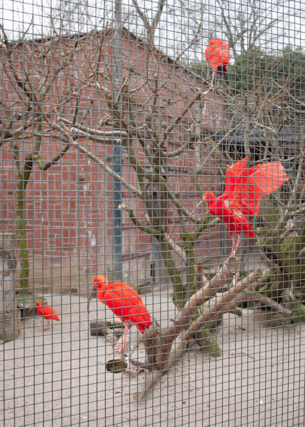 The Most Depressing Zoo Animals Ever