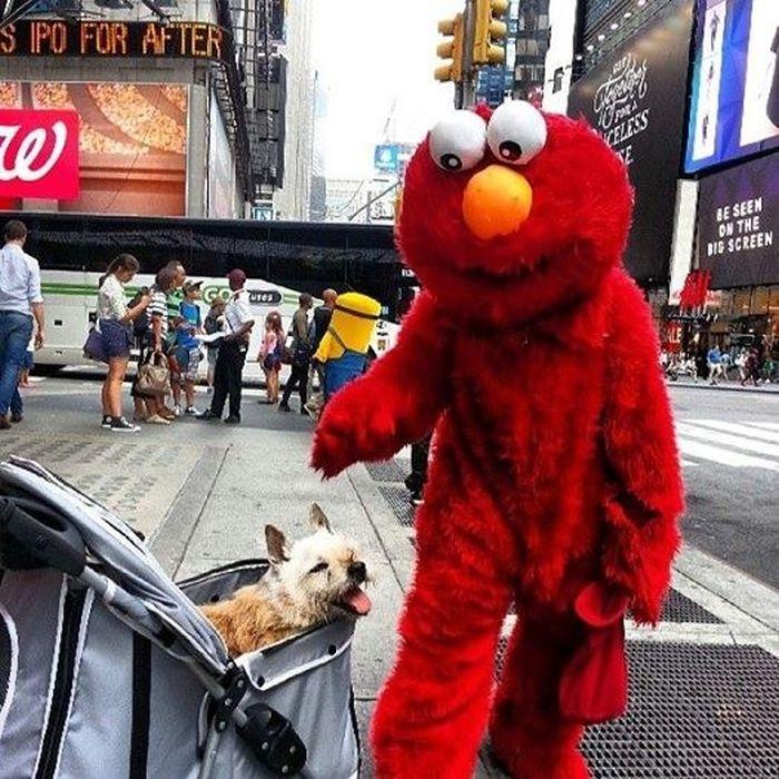 The Final Adventures Of Elmo
