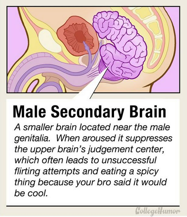 Everything You Need To Know About Men