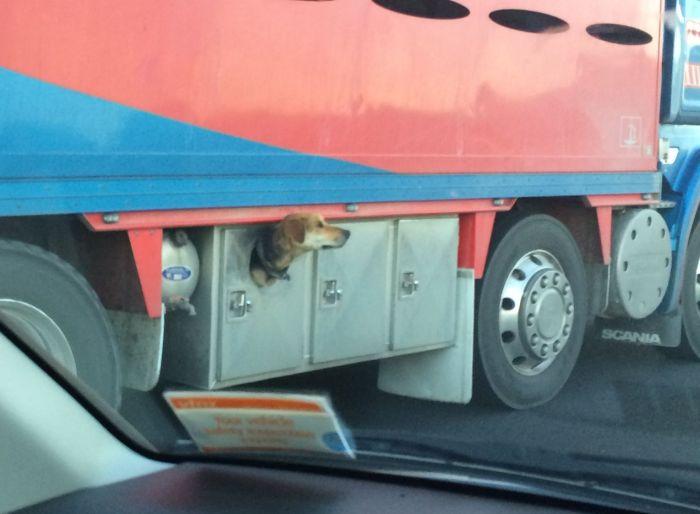 Dog Hides In Truck