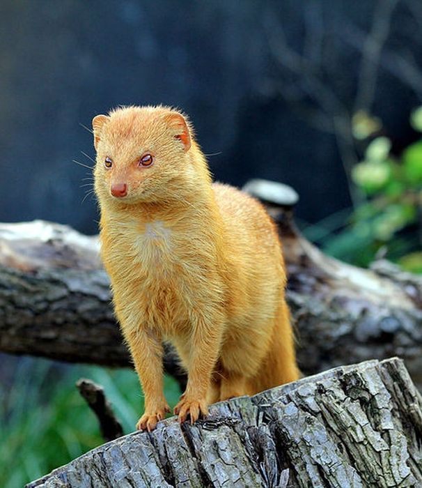 These Mutant Animals Are The Wrong Color