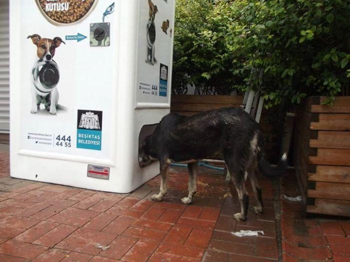 Amazing Machine Feeds Homeless Animals