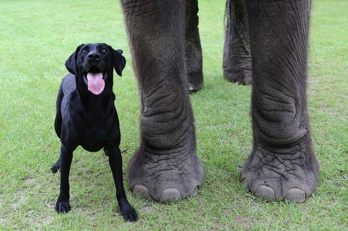 This Elephant and Dog Are Best Friends Forever