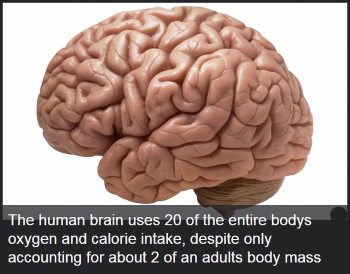 Facts You Didn't Know About The Human Body