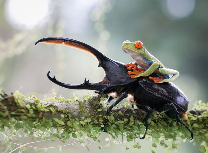 Perfectly Timed Wildlife Photos
