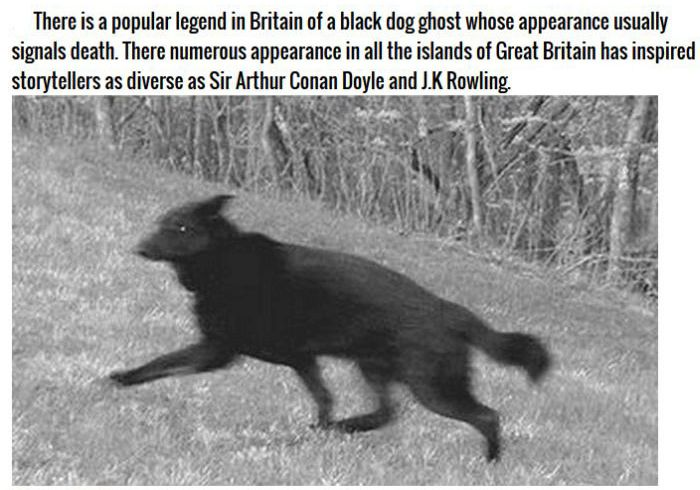 Terrifying Ghost Animals Across The Globe