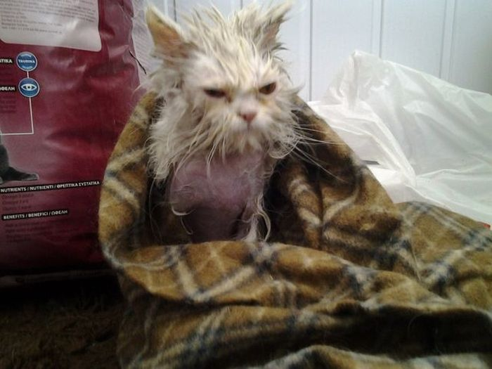 Amazing Rescued Cat Transformation